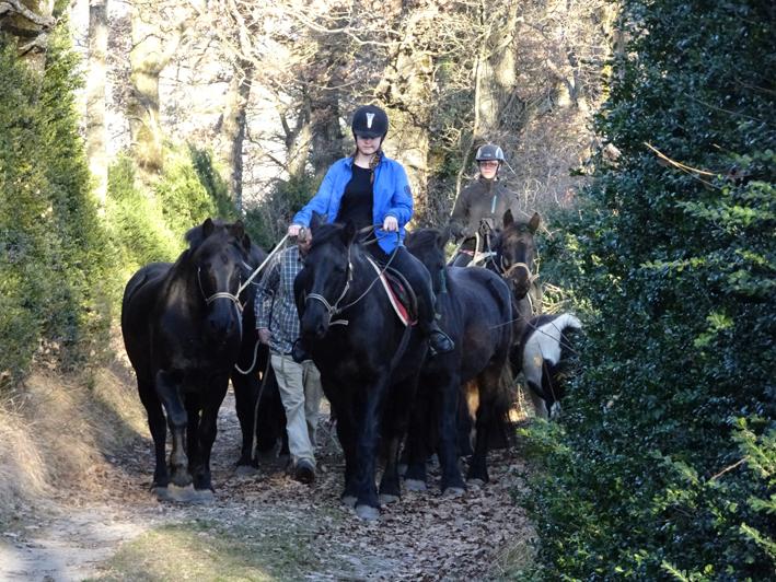 Ambre du Percy emmène le troupeau, pour changer de parc.