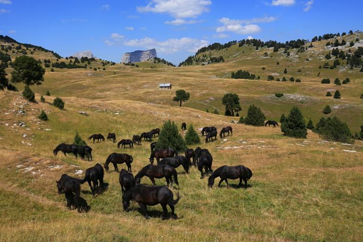 Dans le vallon de Combeau, en face du Mont Aiguille, photo Alain Herrault